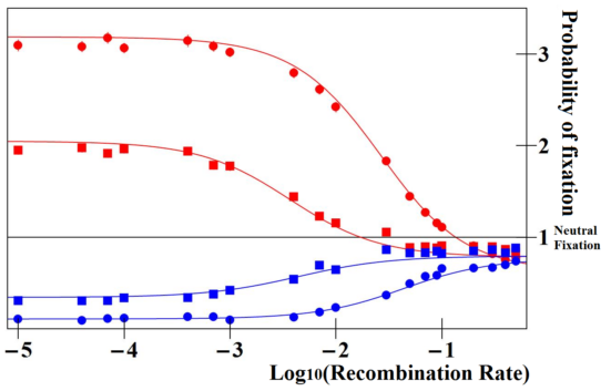 Graph comparing the fixation rates of enhancer alleles at different recombination rates